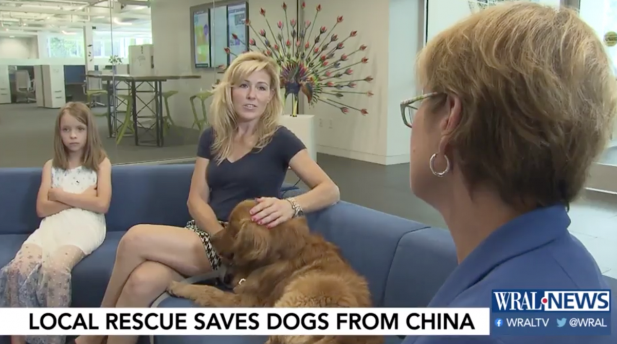 China Rescue Dogs and Other Local Businesses Pitching In To